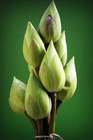 lotus-1550953_960_720